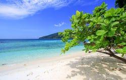 Klarer gree Baum auf einem Strand mit Seehintergrund Stockfotos