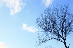 Klarer Himmel mit Baum Slihouette Lizenzfreie Stockbilder