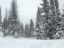Klarer kalter Wintertag mit Schnee bedeckte Bäume Lizenzfreies Stockfoto