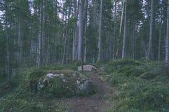 klarer Morgen im Wald Fichten- und Kieferwald mit tru lizenzfreies stockfoto