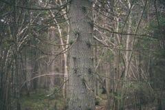 klarer Morgen im Wald Fichten- und Kieferwald mit tru stockbilder