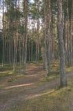 klarer Morgen im Wald Fichten- und Kieferwald mit tru stockfotos