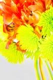Klarer ttulip und Gänseblümchenblumenstrauß Stockbilder