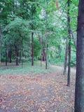Klarer voller Tag im Herbstwald lizenzfreie stockfotos