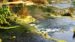 Klarer Wasserstrom bei Roski fällt innerhalb des Krka Nationalpark Kroatien stockfotos