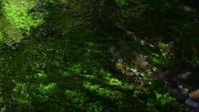 Klarer Wasserstrom der Nahaufnahme über Alge stock footage