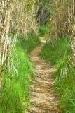 klarer Weg im Wald durch trockene Hürden die Weise wird mit trockenen Blättern umfasst und an beiden Seiten gibt es grünes Gras D lizenzfreie stockfotos