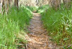 klarer Weg im Wald durch trockene Hürden die Weise wird mit trockenen Blättern umfasst und an beiden Seiten gibt es grünes Gras D stockfotografie