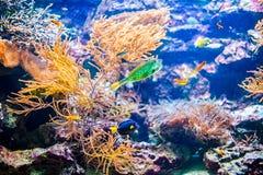 Klares buntes korallenrotes Kolonienriff und tropische Fische im Ozean Stockfotos