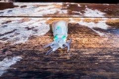 Klares grünes Auge des Kalmars Stockbilder