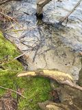 Klares Wasser des Sees Stockbild
