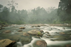 Klares Wasser Forest Pebble Stones Rocky River Lizenzfreies Stockbild