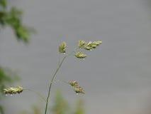 Klares Wasser im See während eines Regens Lizenzfreie Stockbilder