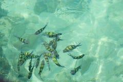 Klares Wasser, zum von Fischen zu sehen Stockfotografie