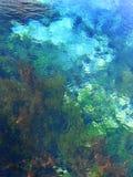 klart fjädervatten Royaltyfria Bilder