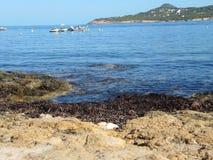 Klart havsvatten som är kallt och reflekterar vaggar dolt i havsväxtlinje kusten royaltyfri bild