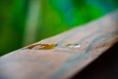 Klart perspektiv av vattendroppe i mitt av trästången fotografering för bildbyråer