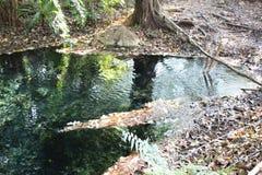 Klart vårvatten nära byn arkivfoton