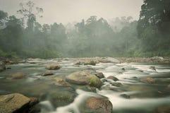 Klart vatten Forest Pebble Stones Rocky River Royaltyfri Bild