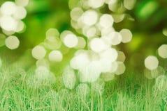 Klarteckenbokeh med gräsbakgrund Arkivbild
