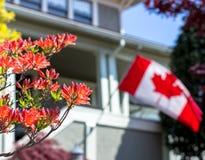 Klasa średnia dom z kwiatami w przedpolu i kanadyjczyk zaznaczamy falowanie w tle zdjęcia stock