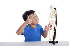 klasowa anatomii istota ludzka Zdjęcia Stock