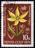 Klasse Tulipa, Tulpenblume, der Familie Liliaceae, circa 1974 Stockbild