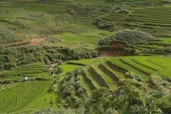 Klassiek Aziatisch padieveld, sapa Vietnam Stock Foto's