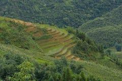 Klassiek Aziatisch padieveld, sapa Vietnam Royalty-vrije Stock Foto