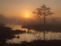 Klassiek moeraslandschap, vroege ochtend Stock Fotografie