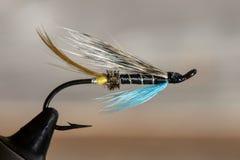 Klassieke en kleurrijke Atlantische zalm die natte vlieg vissen royalty-vrije stock afbeeldingen
