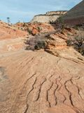 Klassieke meningen, Zion National Park Stock Afbeeldingen