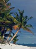 Klassieke Palm Royalty-vrije Stock Foto's