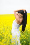 Klassieke Schoonheid op Gebied van Wildflowers Stock Foto