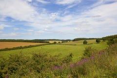 Klassische englische Landwirtschaftslandschaft mit Wildflowers Lizenzfreie Stockfotografie