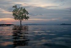 Klassische Thailand-Sonnenuntergangansicht mit alleinbaum im Wasser Lizenzfreie Stockfotografie