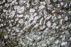Klassische Travertinmarmor-Steinbeschaffenheit Stockfotografie