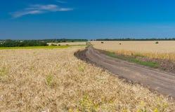 Klassische ukrainische Sommerlandschaft mit Maisfeldern Stockfotos