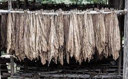 Klassische Weise des Trocknens des Tabaks in der Scheune lizenzfreies stockfoto