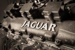 Klassischer Abschluss Jaguars Enigine oben Stockfotografie