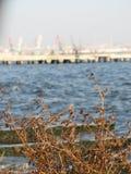Klassischer sonniger Schuss des Seehafens des Kaspischen Meers und der Promenade in Baku, Aserbaidschan bis zum Nacht Lizenzfreie Stockbilder