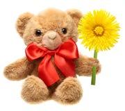 Klassischer Teddybär mit dem roten Bogen, der Blume anhält Stockfoto
