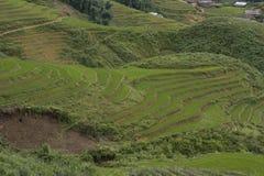 Klassisches asiatisches Reisfeld, sapa Vietnam Lizenzfreie Stockfotografie