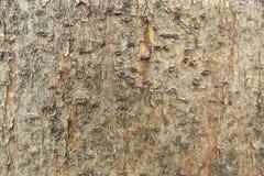 Klassisches Naturholzmuster Stockfotografie