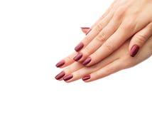 Klassisk burgundy manikyr arkivfoto