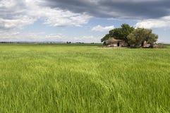 Klassiskt Ebro deltalandskap med dess risfält Arkivfoton