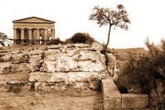 klassiskt grekiskt italy gammalt tempel arkivbilder