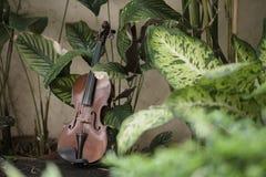 Klassiskt instrument f?r horisontalfiol med naturlig bakgrund royaltyfri fotografi