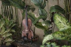 Klassiskt instrument f?r horisontalfiol med naturlig bakgrund arkivfoto