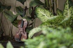 Klassiskt instrument f?r horisontalfiol med naturlig bakgrund arkivbilder